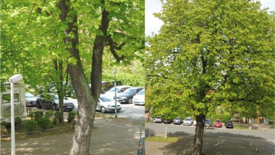 Baum - Symbol für zwei Wege zum Abschluss